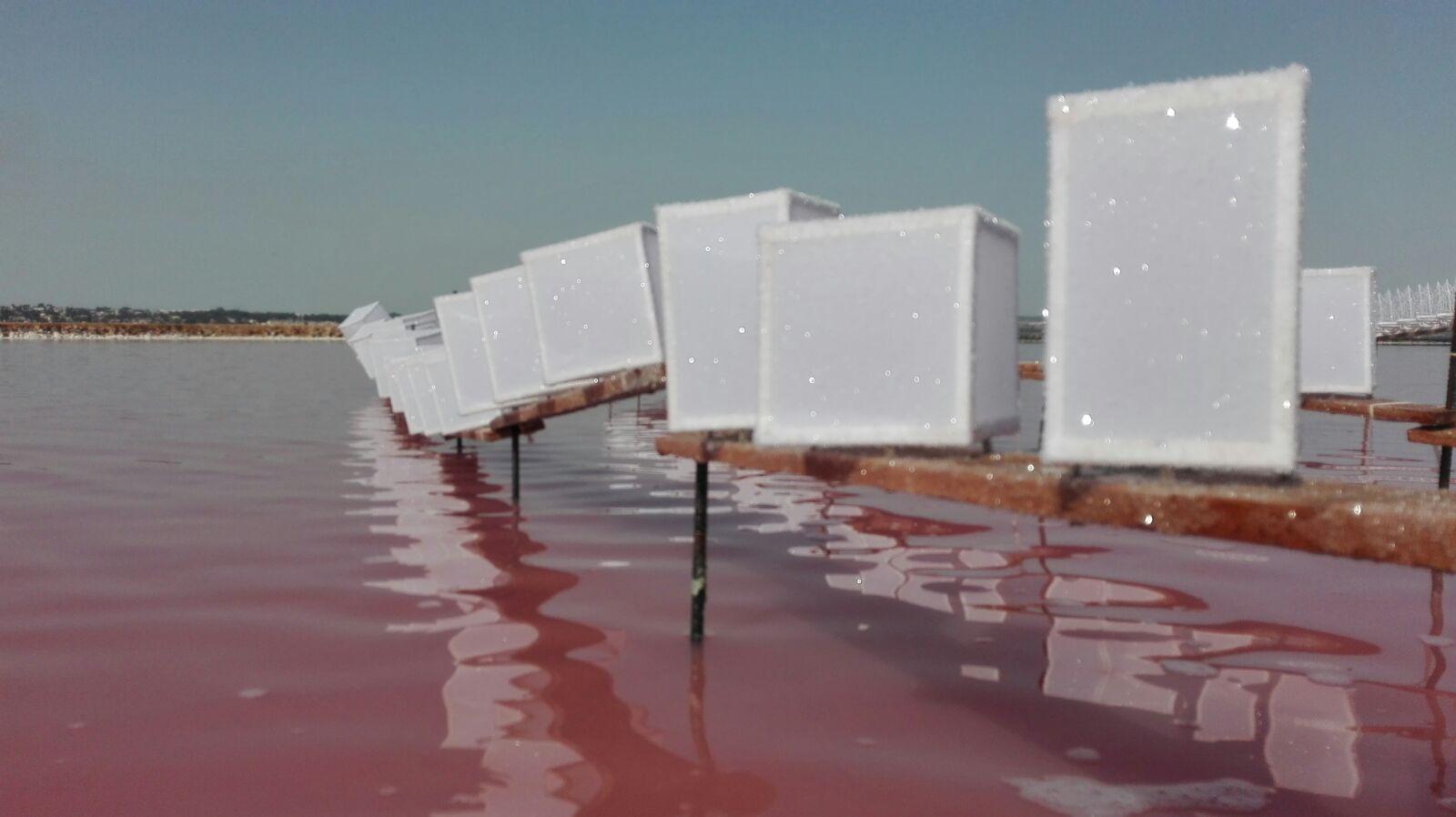 C:\Users\ANA\Documents\00- ARTESANÍA de sal de Torrevieja\00-PROCESO  elaboracion  de la artesanía en sal\articulo sobre el CUAJE\baja resolución\CAYUELAS.jpg